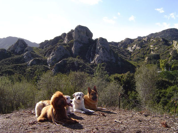 Topanga Pet Resort Dogs On Hill