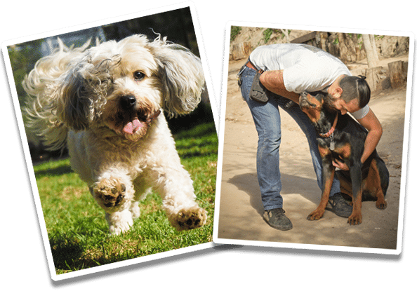dog training & dog boarding policies