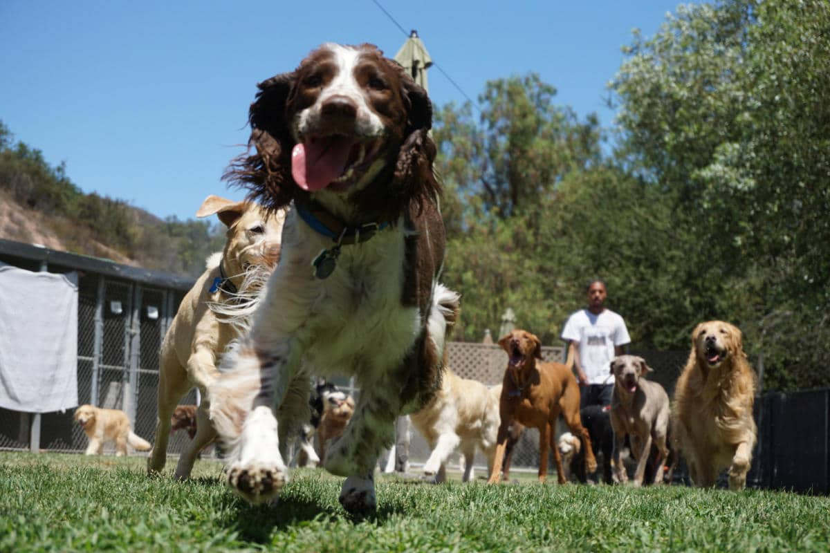 Topanga Pet Resort 169 La S Premier Dog Training Amp Dog
