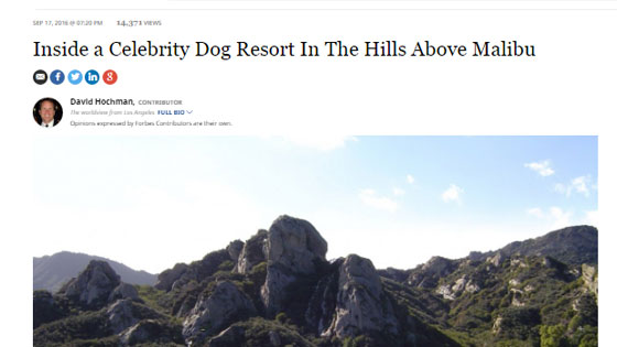 Inside a Celebrity Dog Resort In The Hills Above Malibu - Topanga Pet Resort