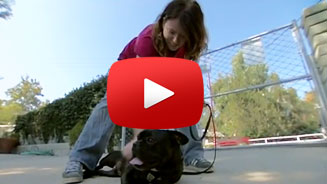 The Dog Whisperer With Cesar Millan: Fondue - S3 Episode 08 (Clip) - A Visit To Topanga Pet Resort