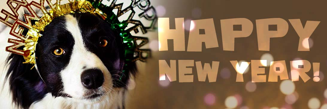 Happy New Year From Topanga Pet Resort