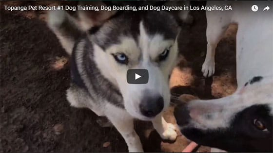 Dog Training, Dog Boarding, Dog Daycare at Topanga Pet Resort