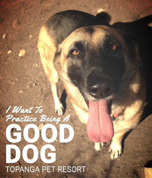 ask the dog trainer - does your dog need training?