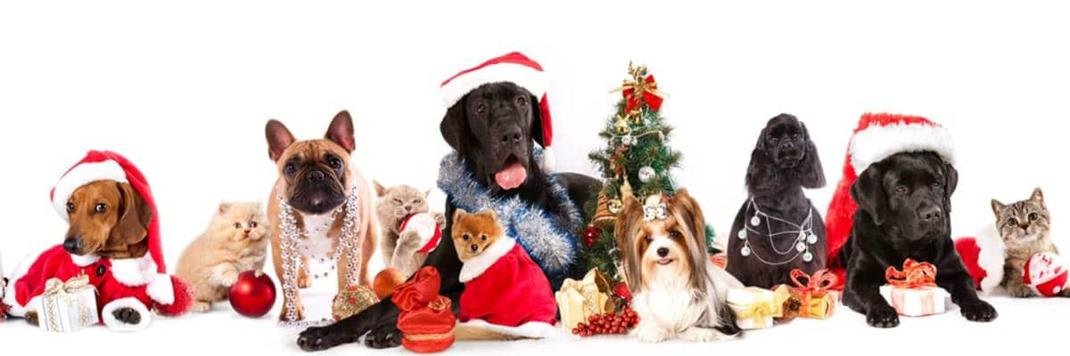 Merry Christmas from Topanga Pet Resort