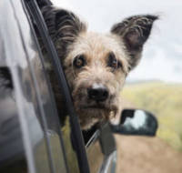 heatstroke and overheating in dogs