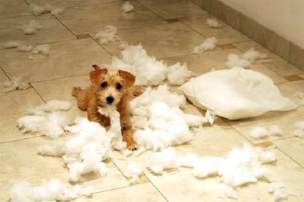 puppy-destroying-pillow