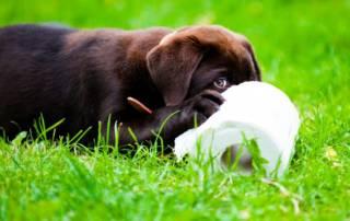 puppy-potty-training