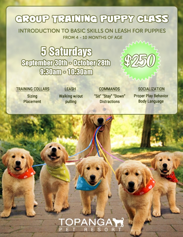 Group Training Puppy Class - September 30 - October 28 2017