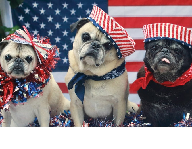 Memorial Day 2018 Dogs