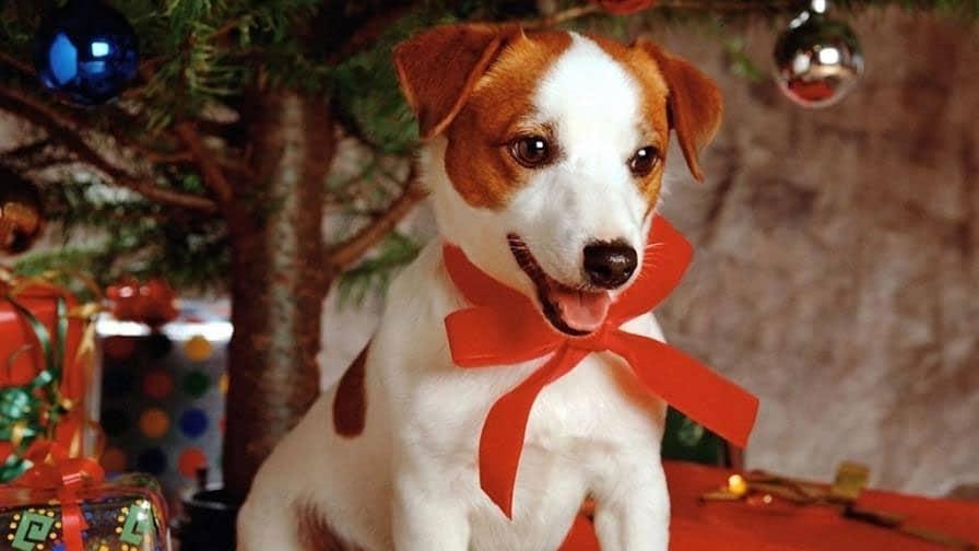 christmas-day-dog