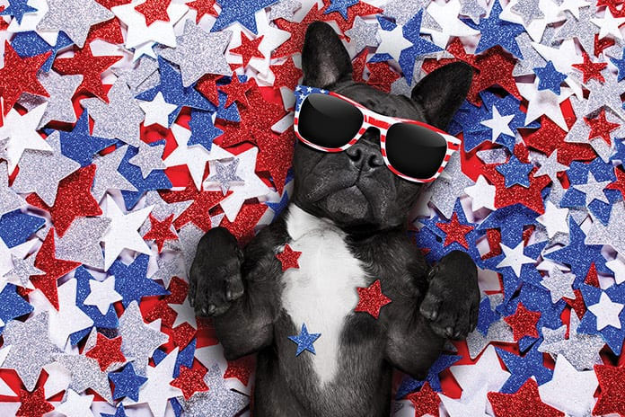 independence-day-dogs