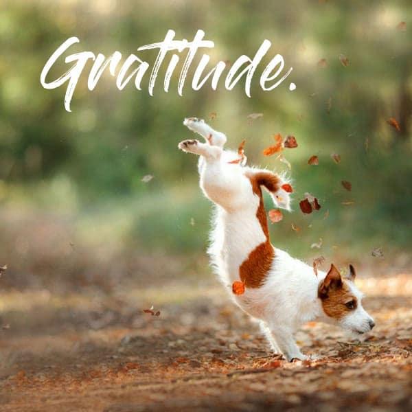 thanksgiving-gratitude-tpr
