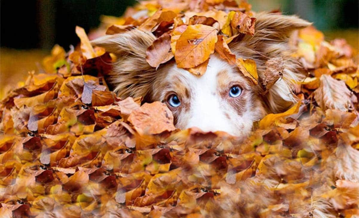 tpr-thanksgiving-dogs-II